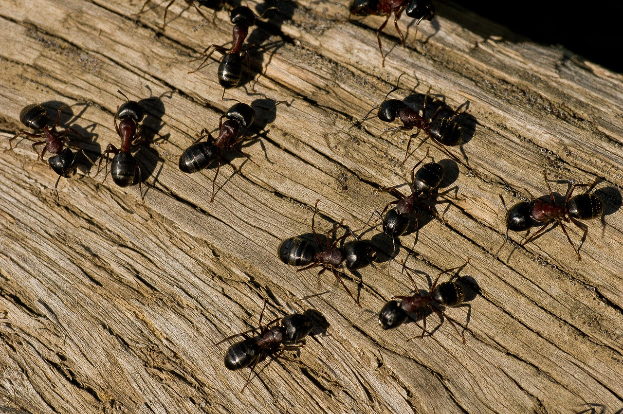 These busy little ants are up to something, I can feel it. Hey, where's my picnic basket?