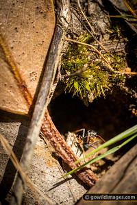 Ant Sentry