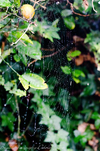 Spider Web on a Rainy Day 7