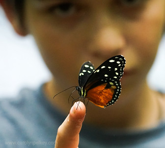 Milo and the butterfly