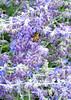 honeybeeside