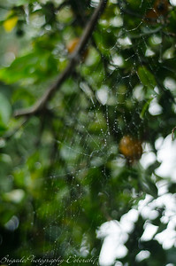 Spider Web on a Rainy Day 9