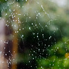 Spider Web on a Rainy Day 3