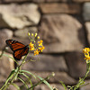 Southern California Monarch I