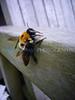 Bee2 (Sat 5 3 08)