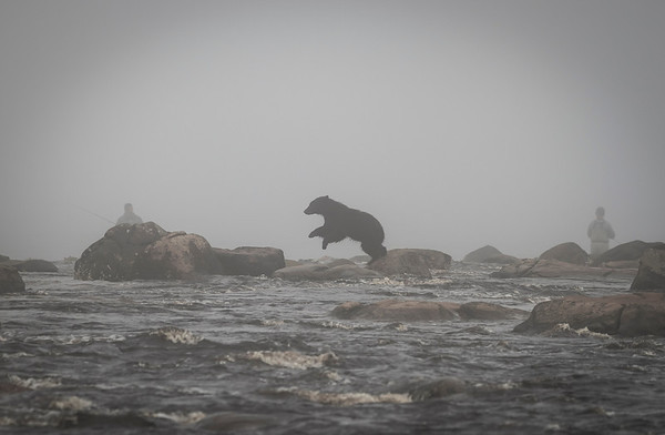 A Black Bear cub hops along the rocks.  Two fisherman in the mist cast their rods unaware of the creature behind them.