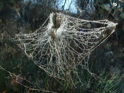 Spiders & Spiderwebs