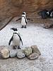 Penguins at Camden Aquarium
