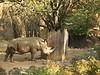 Rhino  - Philadelphia Zoo