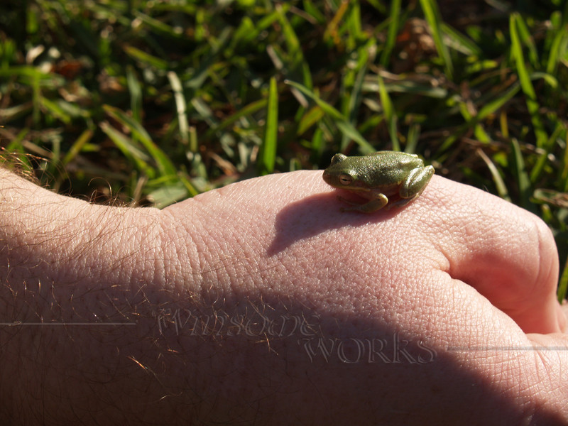Tiny frog we found in restroom by Galveston Bay