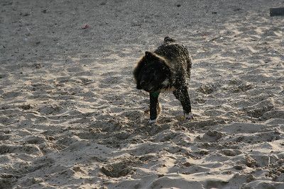 ok.. now to shake the water and sand all over everyone around me.. ahhhhh dog goes one way, skin goes another.. sand and water goes ... everywhere