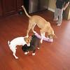 Border Collie Shar Pei.<br /> Jack Rat Terrier.<br /> American Pitbull / Bulldog<br /> Sean feet, legs, and left arm.