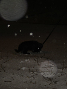 Playing in the snow at night. HUGE FLAKES OF SNOW