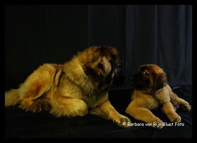 Honden in de studio