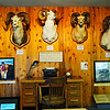 Grand slam of wild sheep trophies adorns the wall over his desk and typewriter.  Left to right, Big Horn Mountain Sheep Ram, Stone's Mountain Sheep Ram, Dall Mountain Sheep Ram (Eleanor's trophy), Desert Mountain Sheep Ram. Dall Mountain Sheep Ram