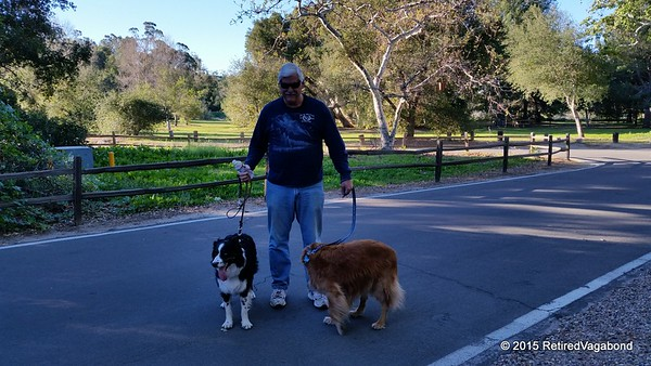 Jagger has a new California friend - Rich and his Golden, Mollie