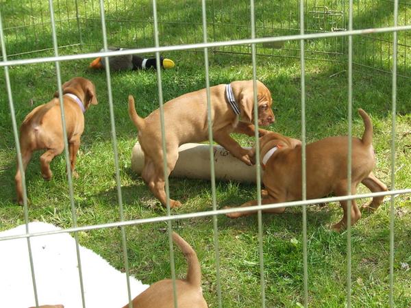 Kyra's pups