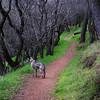 17 OG - Jazz on Vellacitos Trail, Del Valle