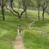 Green Green California