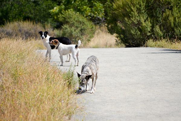 Roxie herds, Charlie digs, Jazz sniffs.