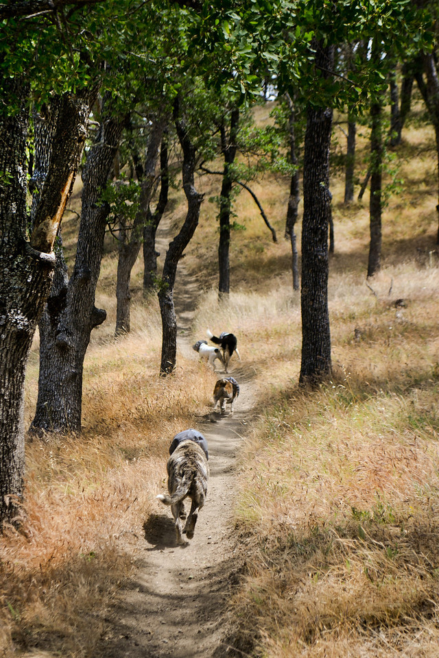Trail Hounds  ..... all cooled off after a swim, leading the way home.   This is what friendship is all about.... sharing the trail, the time, the company.  (Tarantula Cove)