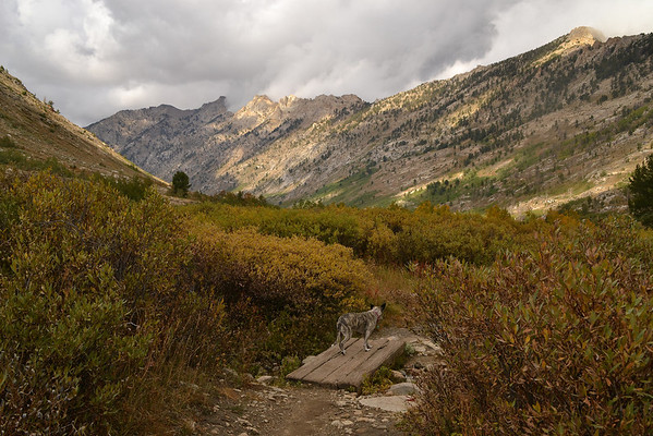 Jazz in Lamoille Canyon