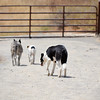 """Jazz, Charlie, Roxie..... """"the pack""""."""