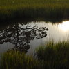 Reflections in the marsh
