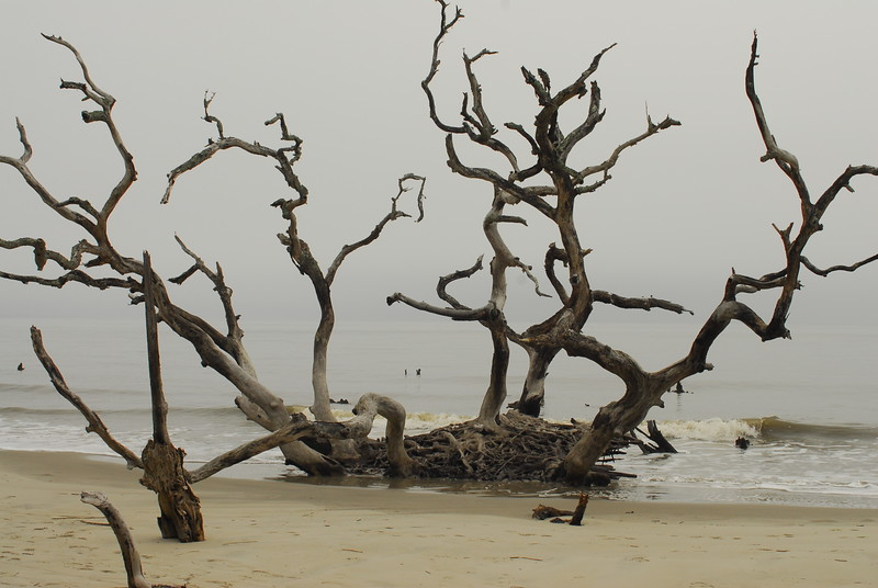 Last stand, Driftwood Beach