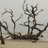 Last stand, Driftwood Beach