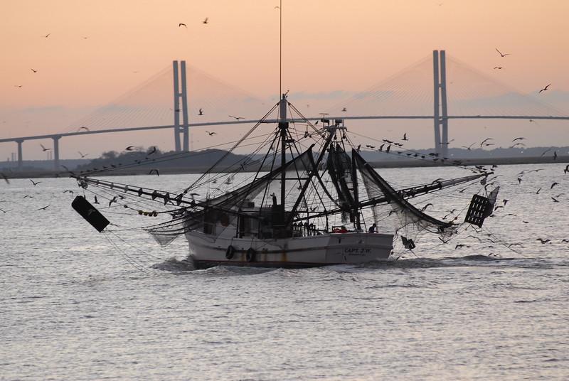 Shrimp boat heading to the dock