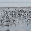gulls resting