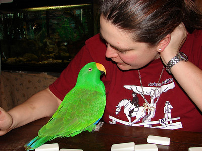 Jesse the Eclectus