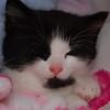 Jessica the Black and White kitten