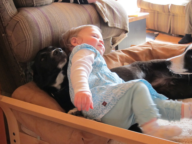 Puppy pile.  (note - adults within an arms reach here...)