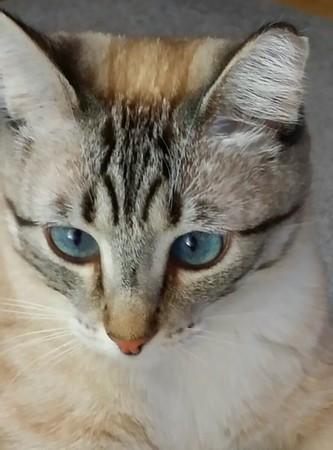 Joan's kitty
