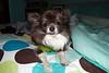 Joey 12-2008 001