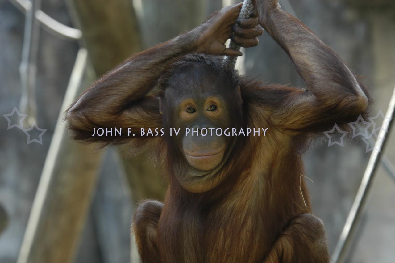 jb tap zoo 101