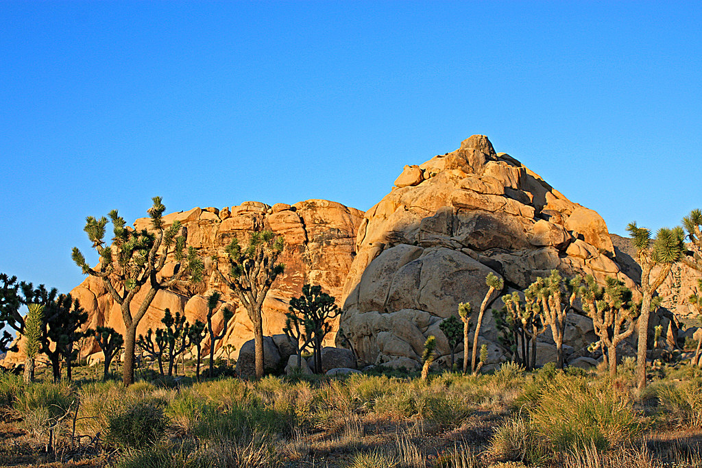 california,desert,joshua tree,monument,state park,golden,photograph,landscape,nature,rocks