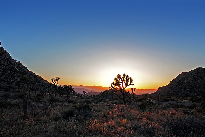 Sunset in the Joshua Tree National Monument