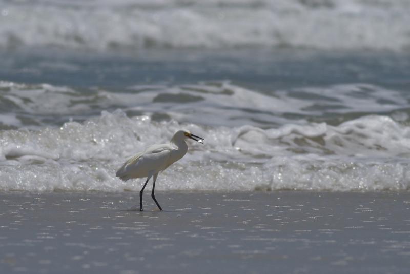 Crescent Beach 052210-9