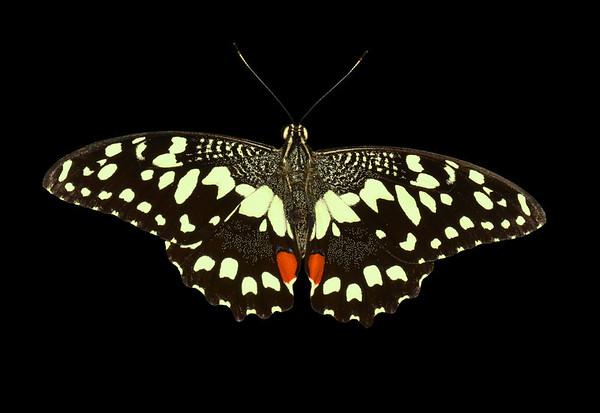 Just Butterflies