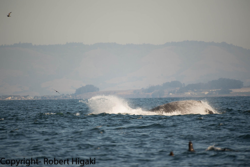 half hearted breach or a quick surface