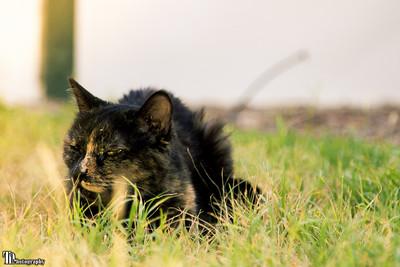 Jynx Enjoying the Outside