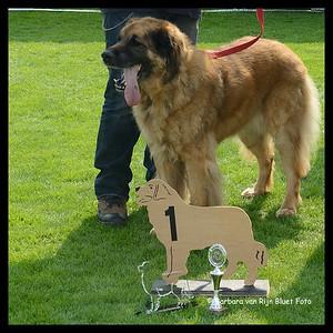Winnaar Oudste Hond: Dione Lion de la Toison d'Or