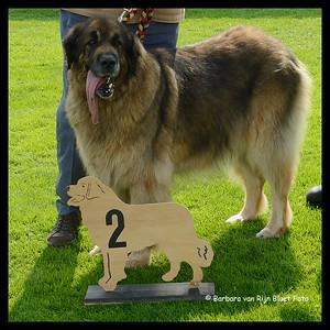 Tweede plaats Oude Wijze: Dione Lion de la Toison d'Or