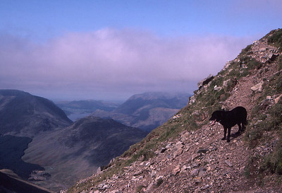Haystacks and the Buttermere Fells from Great Gable, in the English Lake District