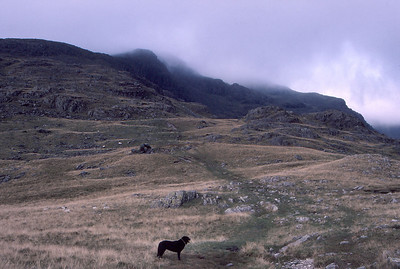 Heading for Red Pike from Yewbarrow, on the Mosedale Horseshoe, the English Lake District
