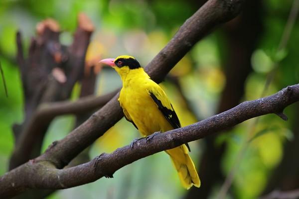 KL Bird Park II