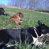 Relaxing in the sun: Jethro, Cletus and Kenda.
